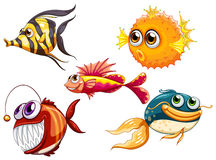 Un groupe de créatures de mer Images stock