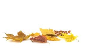 Un groupe de feuilles d'automne Photographie stock