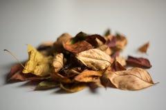 Un groupe de feuilles d'automne sur un fond clair image stock