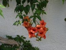 Un groupe de fleurs Photo libre de droits