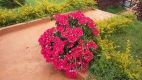 Un groupe de fleurs Photographie stock libre de droits