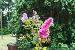 Un groupe de fleurs d'été Image libre de droits