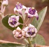 Un groupe de fleurs sauvages Photographie stock libre de droits