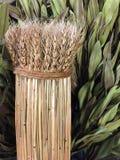 Un groupe de fond sec de paille de blé Image stock