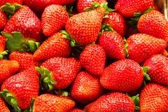Un groupe de fraises Photographie stock libre de droits