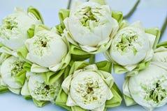 Un groupe de lotus blanc Photos libres de droits