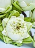 Un groupe de lotus blanc Image libre de droits