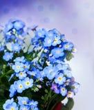 Un groupe de m'oublient pas des fleurs Photos libres de droits