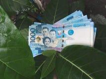 Un groupe de mille factures de peso Photos libres de droits