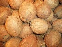 Un groupe de noix de coco mûres fraîches images stock