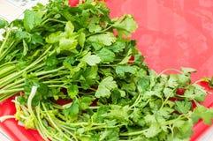 Un groupe de persil vert cru frais Photo stock
