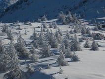 Un groupe de petits arbres de cèdre en montagnes libanaises Photo libre de droits