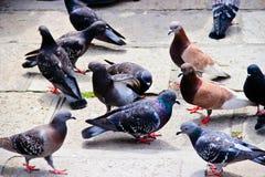 Un groupe de pigeons se tenant autour Image libre de droits