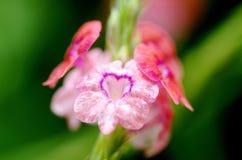 Fleur de l'amour Image libre de droits