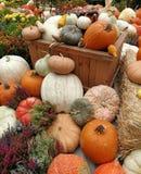 Un groupe de potirons par Halloween Photos libres de droits