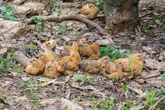Un groupe de poulets photos libres de droits