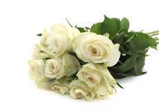 Un groupe de roses blanches Image stock