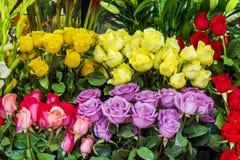Un groupe de roses colorées Images libres de droits