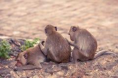 Un groupe de séance et de détente de singe Images libres de droits