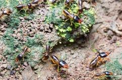 Un groupe de termite émigrant à l'autre endroit image libre de droits