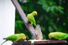 Un groupe des perroquets et d'un écureuil images libres de droits