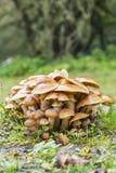 Un groupe gentil de champignon de mycotoxine s'élevant hors de la terre photographie stock libre de droits