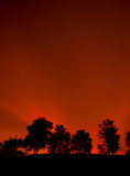 Un grupo de árbol en puesta del sol Imagen de archivo
