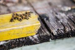 Un grupo de abejas que se sientan junto Imagenes de archivo