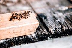 Un grupo de abejas que se sientan junto Imágenes de archivo libres de regalías