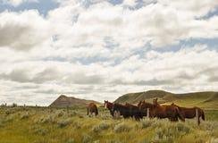 Un grupo de caballos en un valle Imágenes de archivo libres de regalías