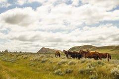 Un grupo de caballos en un valle Fotos de archivo