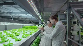 Un grupo de científicos que usan tecnología moderna para supervisar el crecimiento de verduras sanas en una granja vertical autom almacen de metraje de vídeo