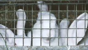 Un grupo de conejos jovenes en la jaula almacen de video