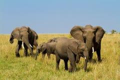 Un grupo de elefantes en el Masai Mara imagenes de archivo