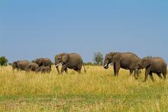 Un grupo de elefantes en el Masai Mara fotografía de archivo libre de regalías