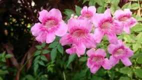 Un grupo de flor del rosa salvaje Fotografía de archivo