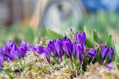 Un grupo de flores Imágenes de archivo libres de regalías