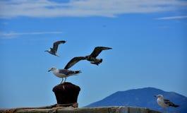 Un grupo de gaviotas en el mar Imágenes de archivo libres de regalías