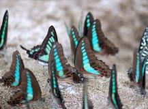 Un grupo de mariposas Fotos de archivo