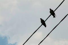 Un grupo de palomas en una línea eléctrica Imagen de archivo