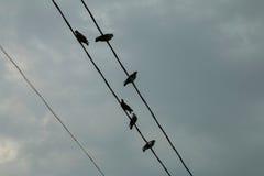 Un grupo de palomas en una línea eléctrica Fotos de archivo libres de regalías