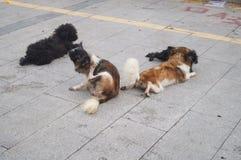 Un grupo de perros Imagen de archivo