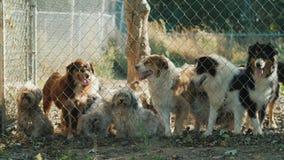 Un grupo de perros fuera de la cerca Perros en un refugio o un cuarto de niños animal metrajes