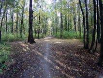 Un grupo de personas que camina en el bosque metrajes