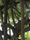Un grupo de primer de las ramas de árbol imagen de archivo libre de regalías