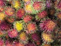 Un grupo grande de fruta colorida del Rambutan Fotografía de archivo libre de regalías