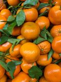 Un grupo grande de pequeñas naranjas y de vides verdes Imagen de archivo