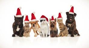 Un gruppo adorabile di sette animali domestici di natale delle razze differenti immagini stock
