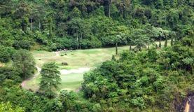Un gruppo che gioca golf. fotografie stock