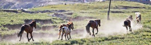 Un gruppo dei cavalli Immagini Stock Libere da Diritti